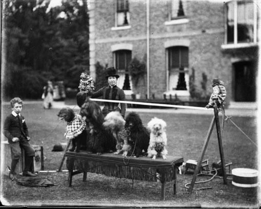 17-Dog-show