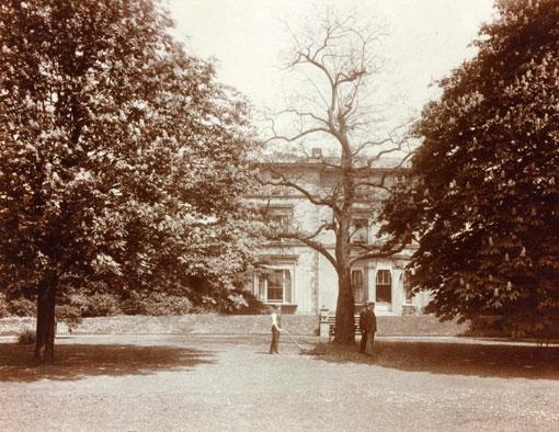 Conifers-1884