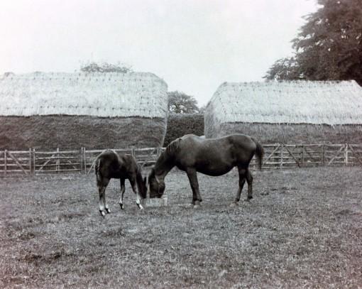 Farm - horses 1880